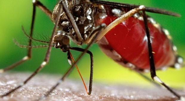 Saúde define estratégias para impedir avanço da dengue nosmunicípios