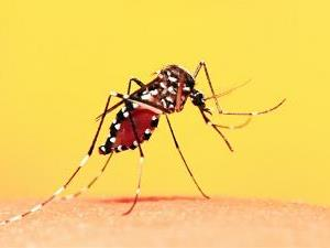 Governo alerta para vacinação contra febre amarela no verão