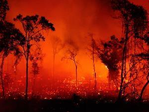 Goiás define estratégias para evitar queimadas