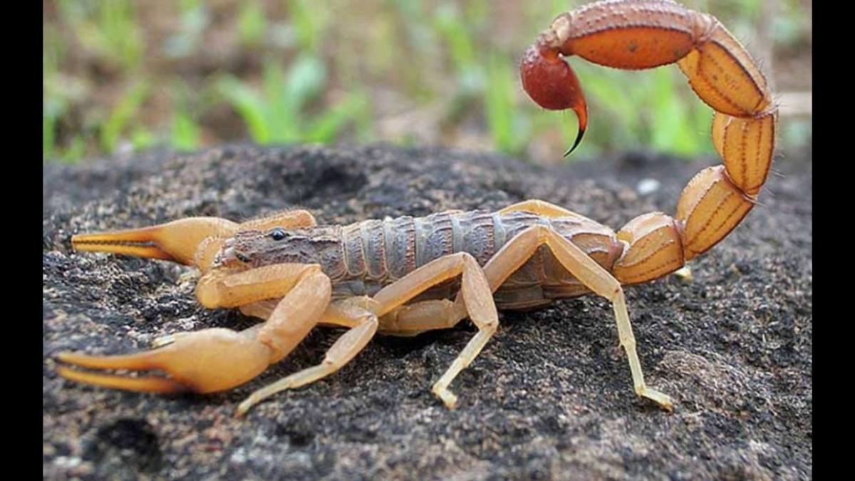 Municípios goianos recebem capacitação contra escorpiões