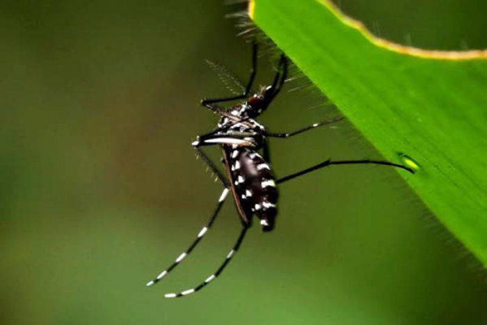 Municípios devem estar atentos ao mosquito Aedes Aegypti